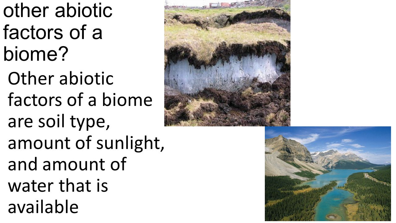 What are some other abiotic factors of a biome