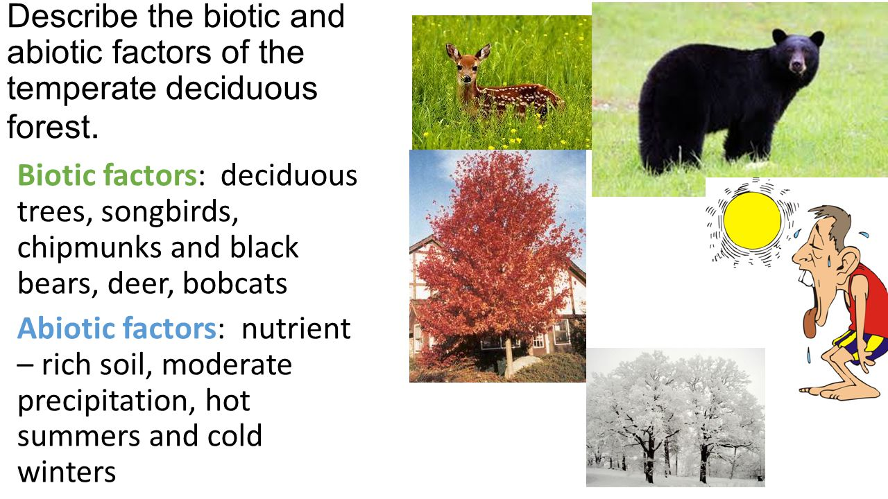 Describe the biotic and abiotic factors of the temperate deciduous forest.