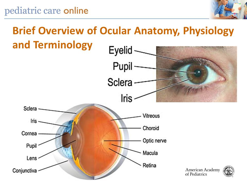 Human Eye Anatomy and Physiology Innerbody - akross.info