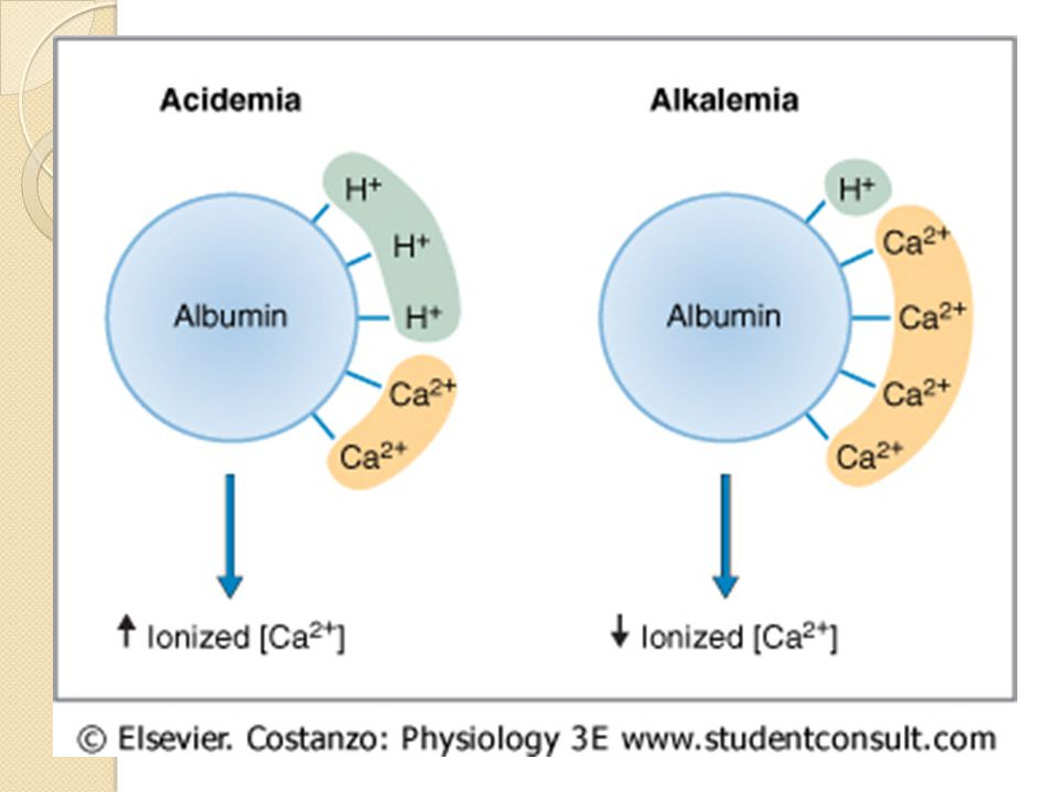 relationship with calcium and albumin