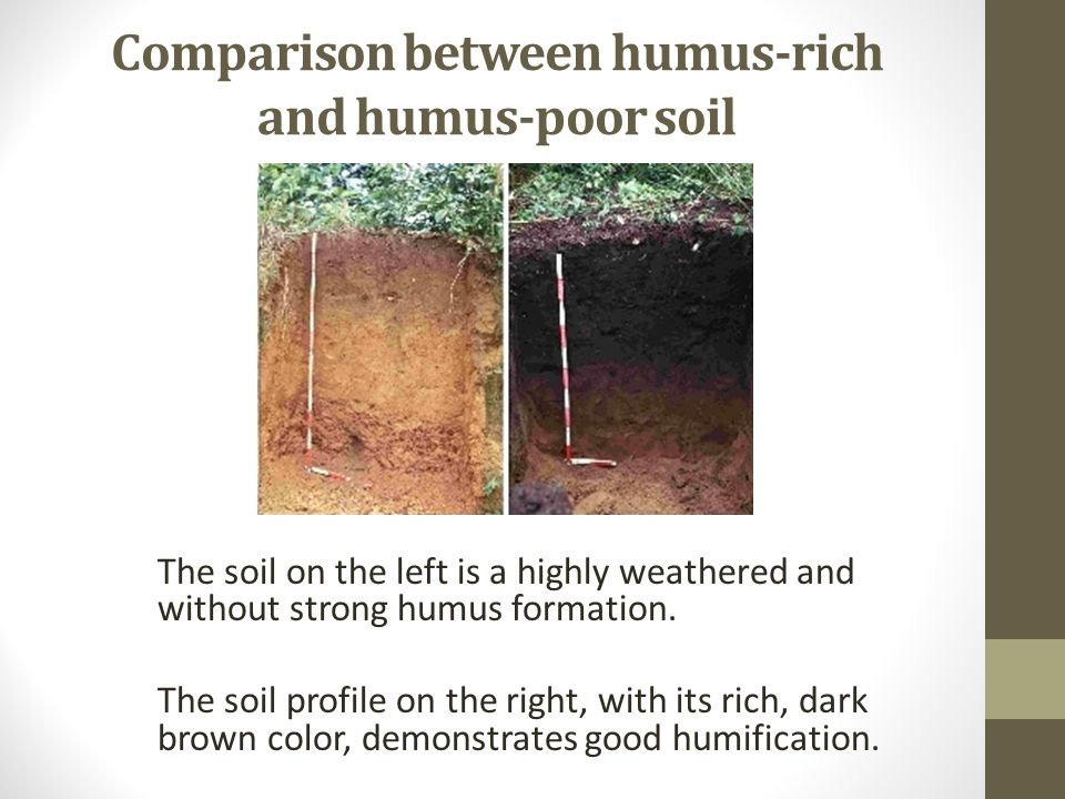 Introduction to soil types structure and pasture for What is rich soil called