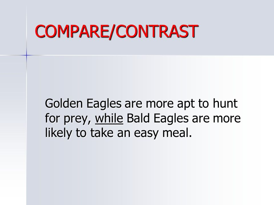COMPARE/CONTRAST Golden Eagles are more apt to hunt for prey, while Bald Eagles are more likely to take an easy meal.