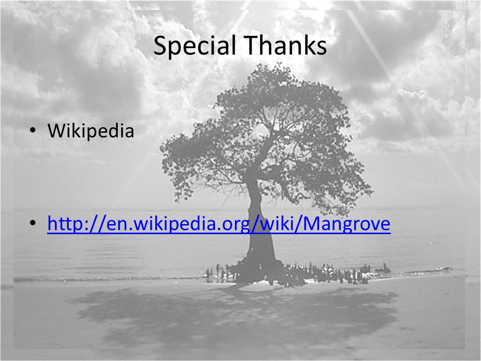 Mangrove Trees Are really cool!. - ppt video online download - photo#36