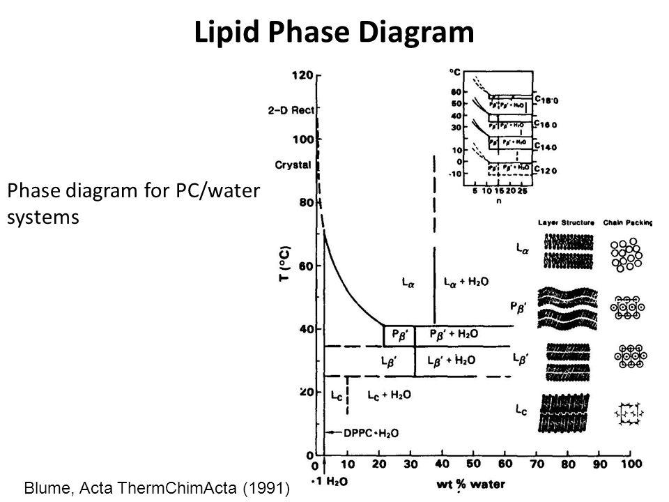 lipid diagram model   19 wiring diagram images