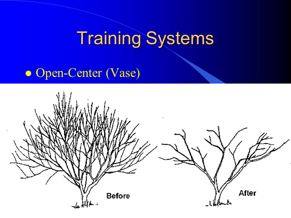 Selecting Fruit Crops For Small Acreage Ppt Video Online