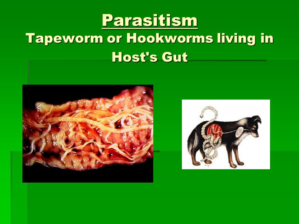 tapeworm and dog symbiotic relationship