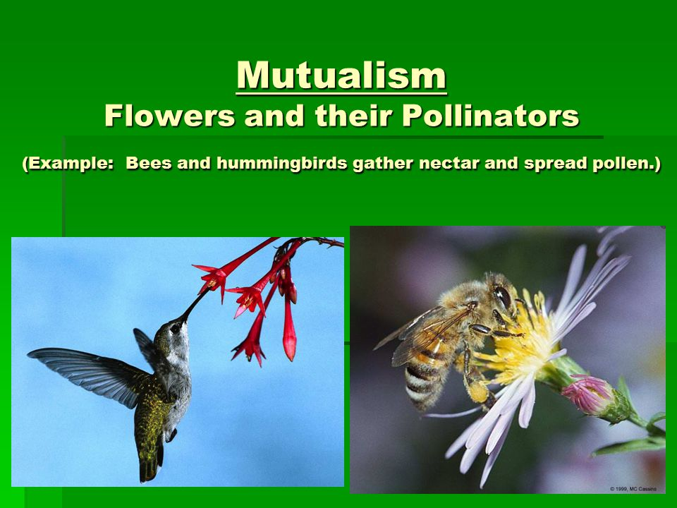 Example Of Mutualism] Example Of Mutualism Example Of Mutualism ...