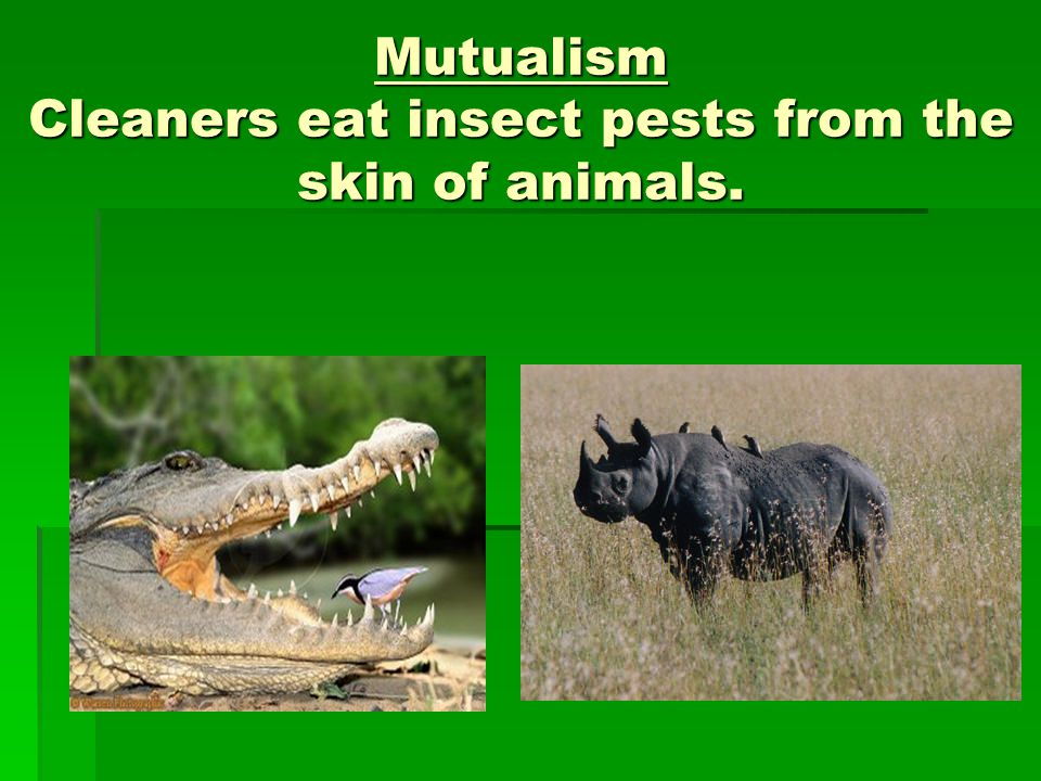 mutualism relationship pictures and quotes