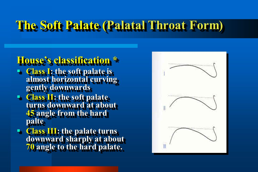 The Soft Palate (Palatal Throat Form)