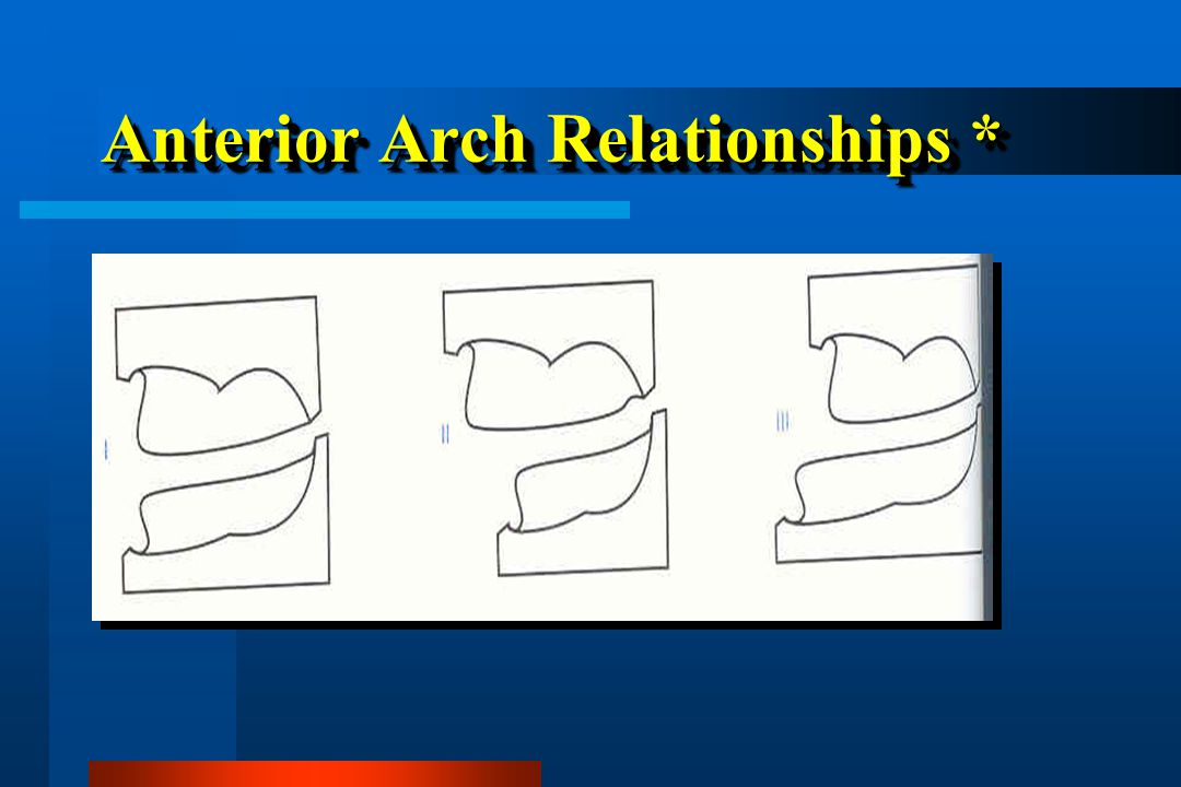 Anterior Arch Relationships *