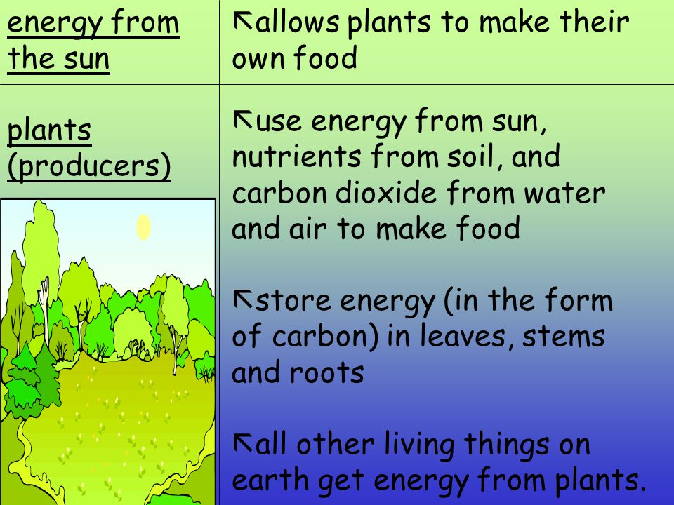 Producers, Consumers and Decomposers - ppt video online download