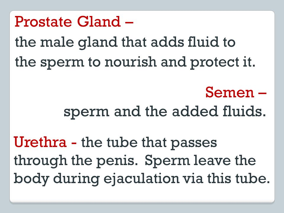 sperm and the added fluids.