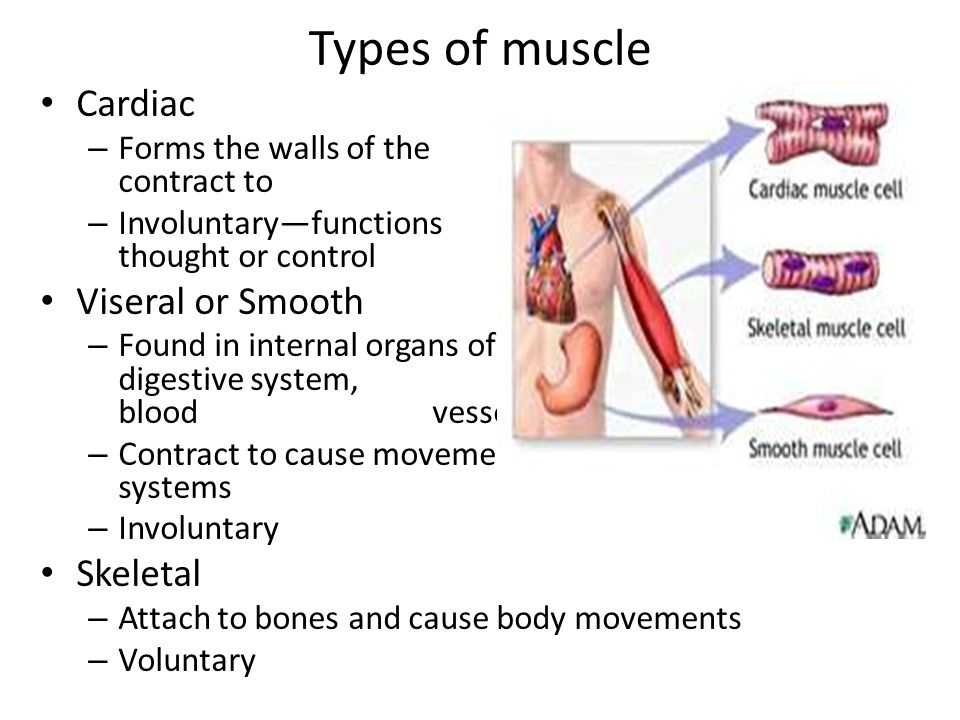 Your Muscles (for Kids) - KidsHealth