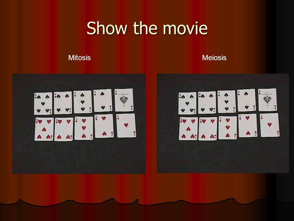 Show the movie Mitosis Meiosis