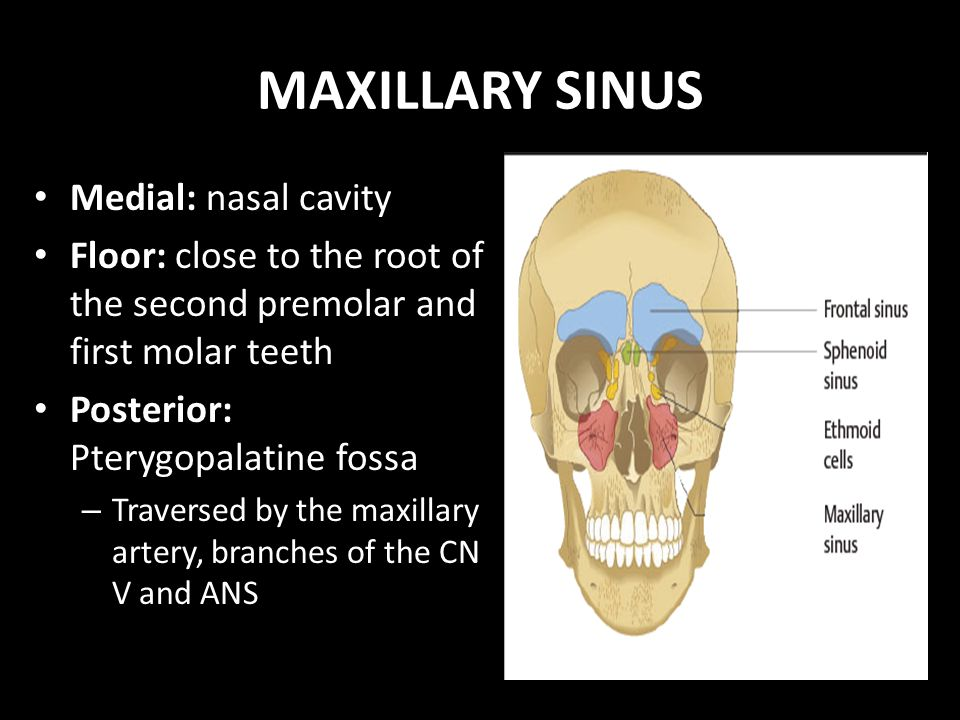 Anatomy of maxillary sinus