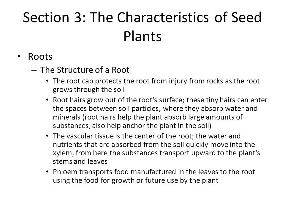Section 3: The Characteristics of Seed Plants