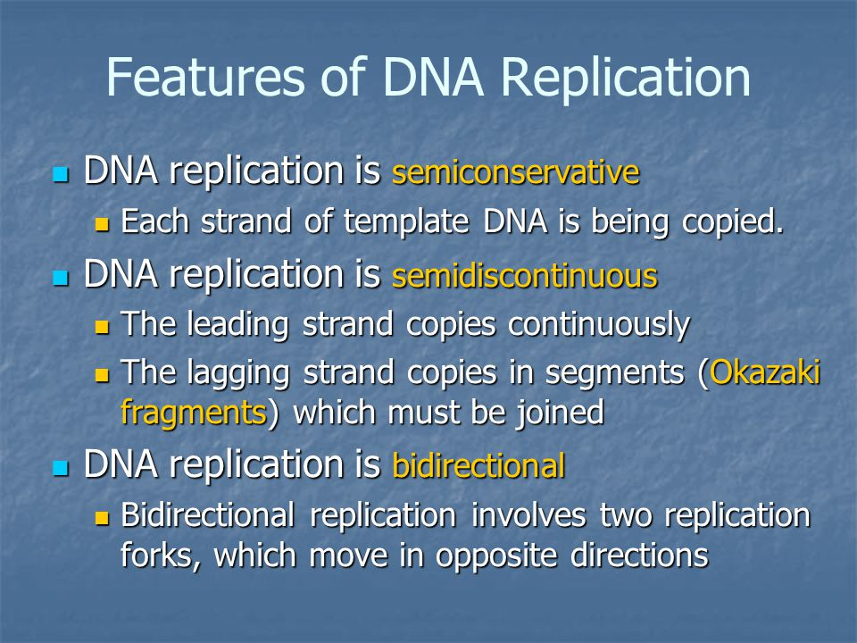semiconservative replication involves a template what is the template - replication chapter ppt download