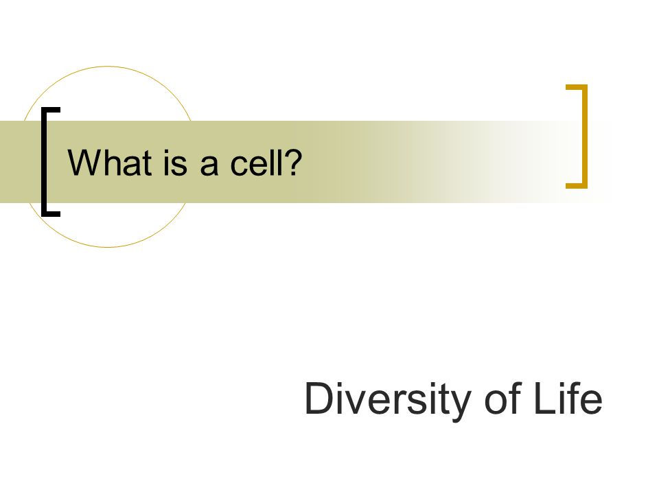 What is a cell Diversity of Life