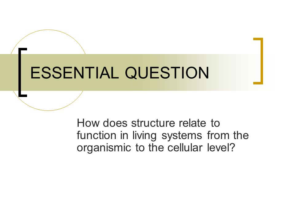 ESSENTIAL QUESTION How does structure relate to function in living systems from the organismic to the cellular level