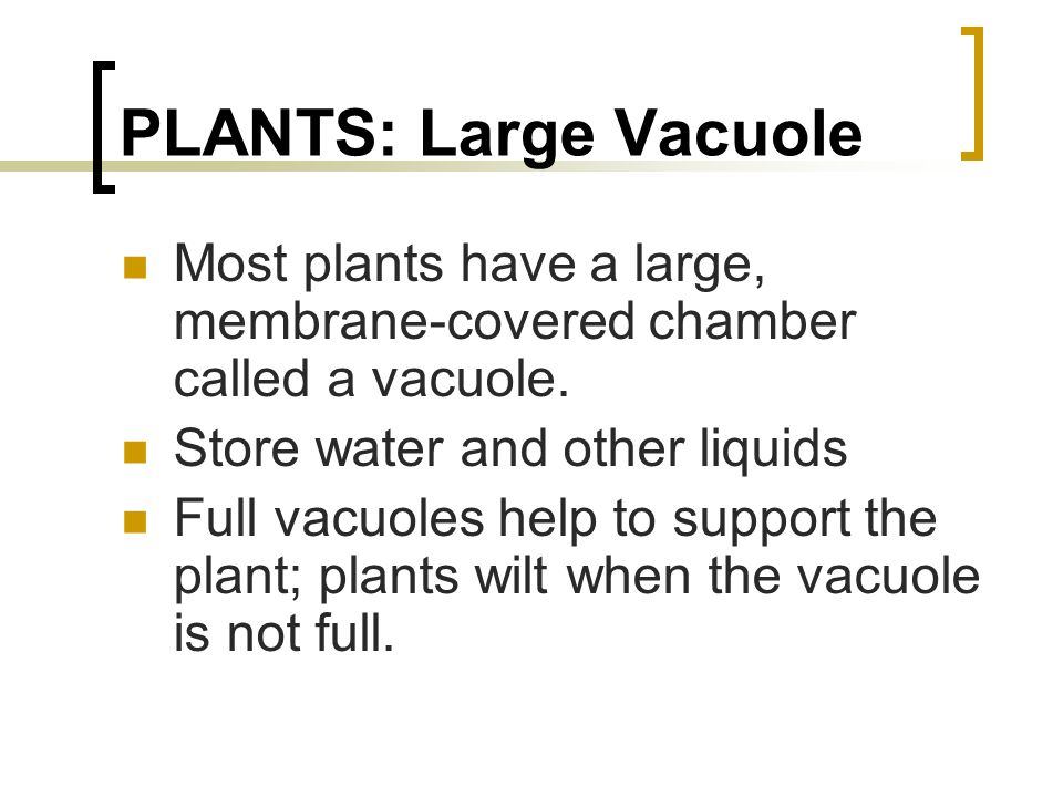 PLANTS: Large Vacuole Most plants have a large, membrane-covered chamber called a vacuole. Store water and other liquids.