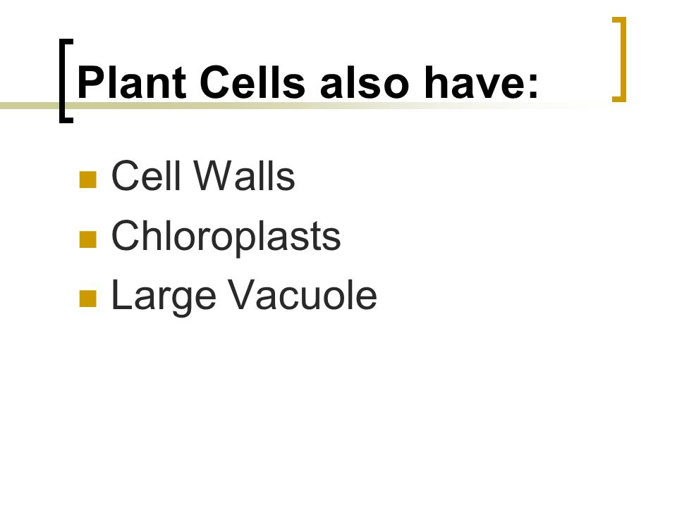 Plant Cells also have: Cell Walls Chloroplasts Large Vacuole