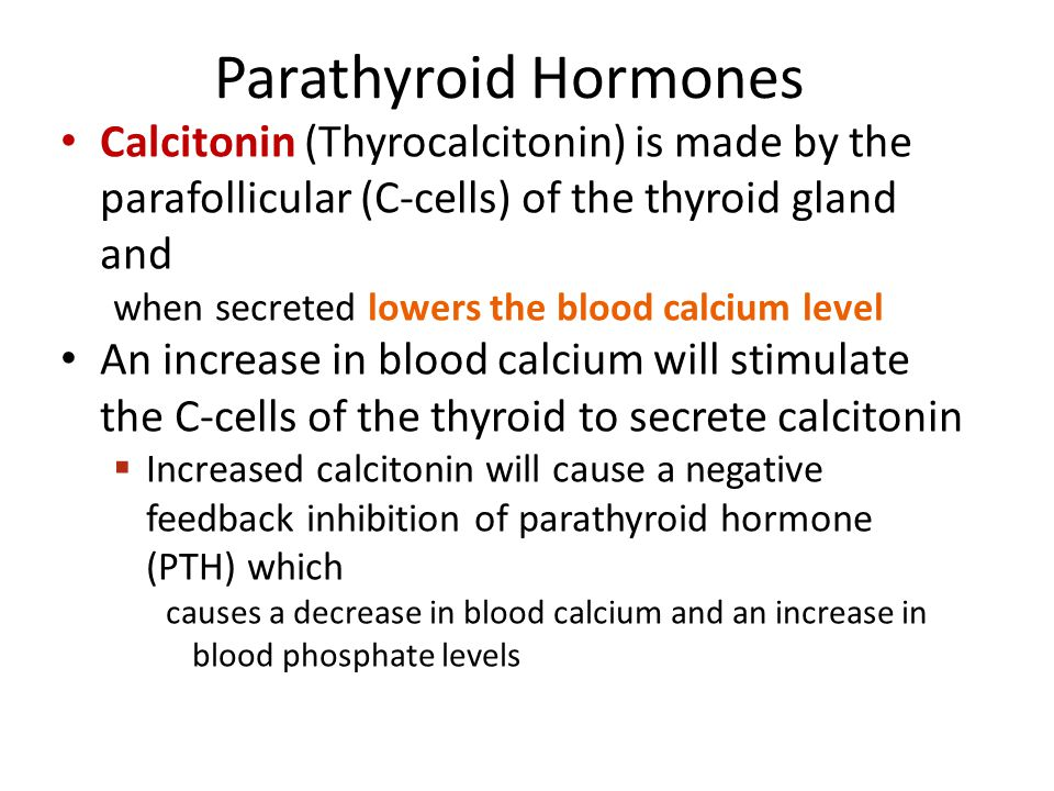 parathyroid hormones calcitonin thyrocalcitonin is made