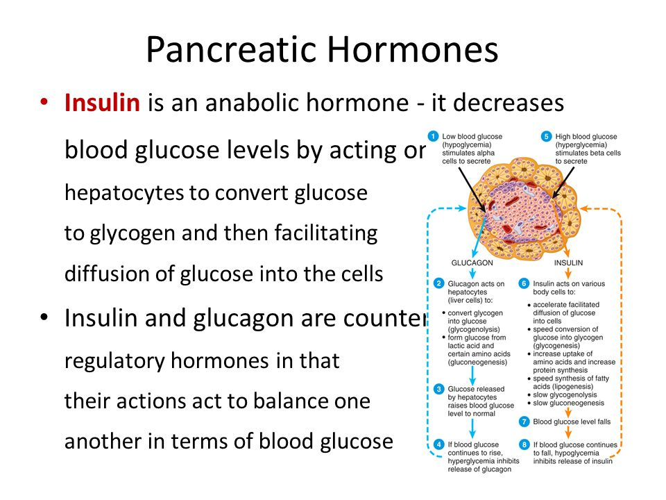 pancreatic endocrine hormones essay Endocrine control over digestive functions is provided by the so-called enteric   the classical gi hormones are secreted by epithelial cells lining the lumen of the   where they affect function of other parts of the digestive tube, liver, pancreas,.
