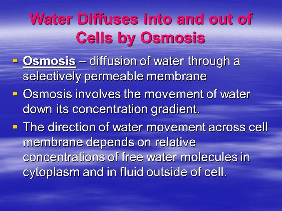 Water Diffuses into and out of Cells by Osmosis