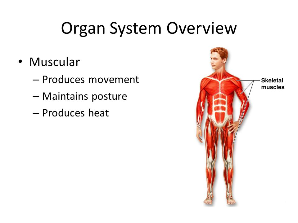 Organ Systems Biology Eoc Review Ppt Video Online Download