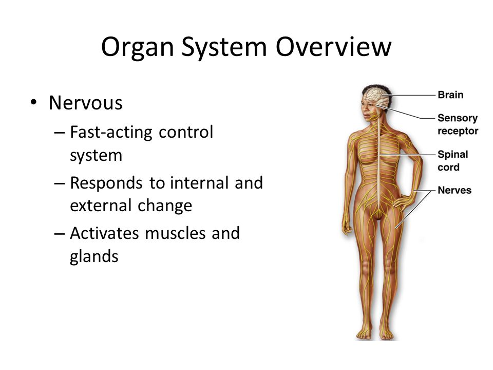 ORGAN SYSTEMS BIOLOGY EOC REVIEW - ppt video online download