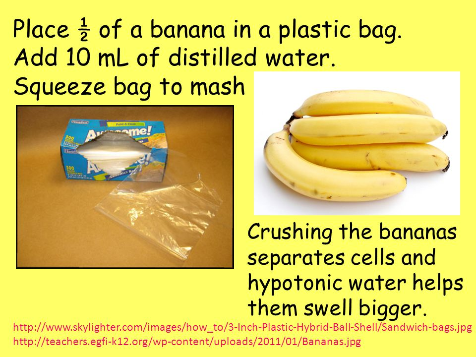 dna extraction of banana Dna is the blueprint for life this simple experiment will show you how to extract dna from fruit like a banana or strawberry all you need are some fruit and some things you probably have around the house right now.