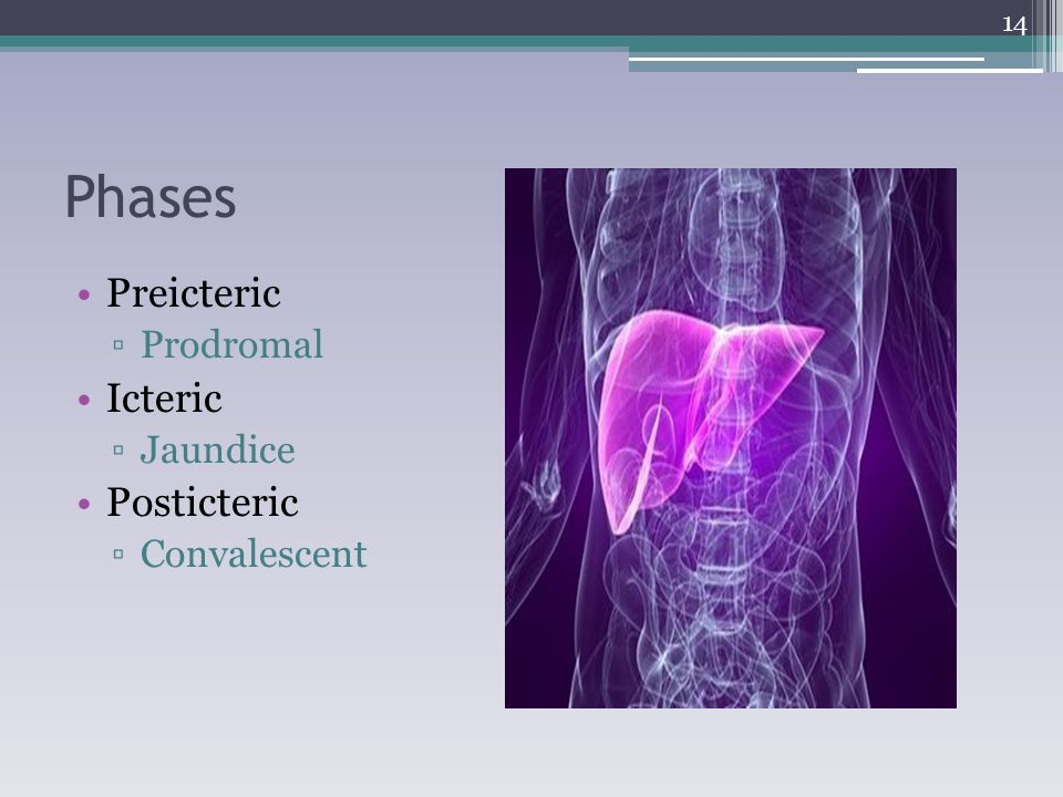 Phases Preicteric Prodromal Icteric Jaundice Posticteric Convalescent