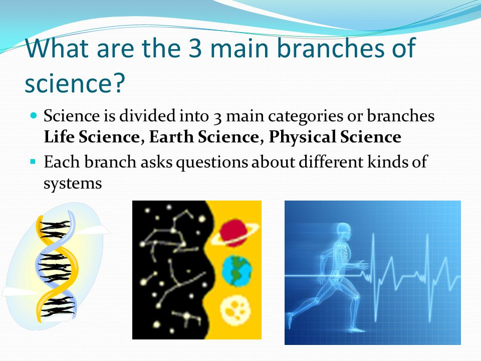 Worksheet Branches Of Science the branches of science ppt video online download what are 3 main science