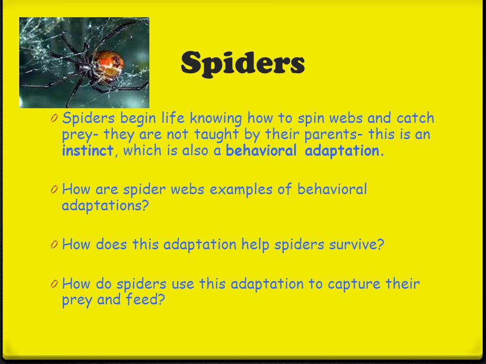 Behavioral Adaptations - ppt download