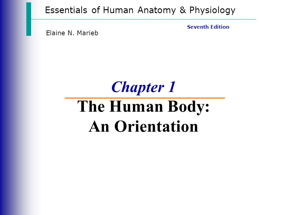 Chapter 1 The Human Body: An Orientation - ppt video online download