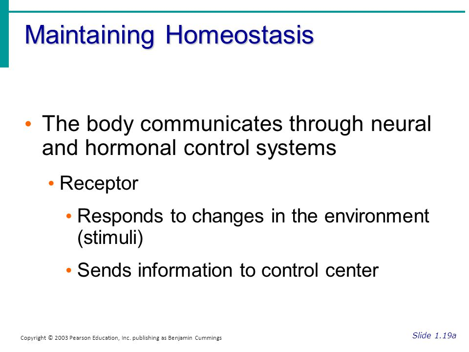 the importance of homeostasis in maintaining As you may remember, homeostasis is the maintenance of a stable internal environment within an organism, and maintaining a stable internal environment in a human means having to carefully regulate .