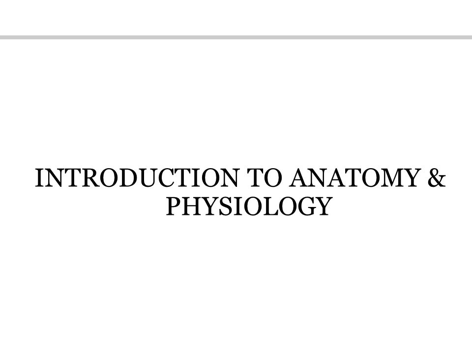 Introduction of anatomy
