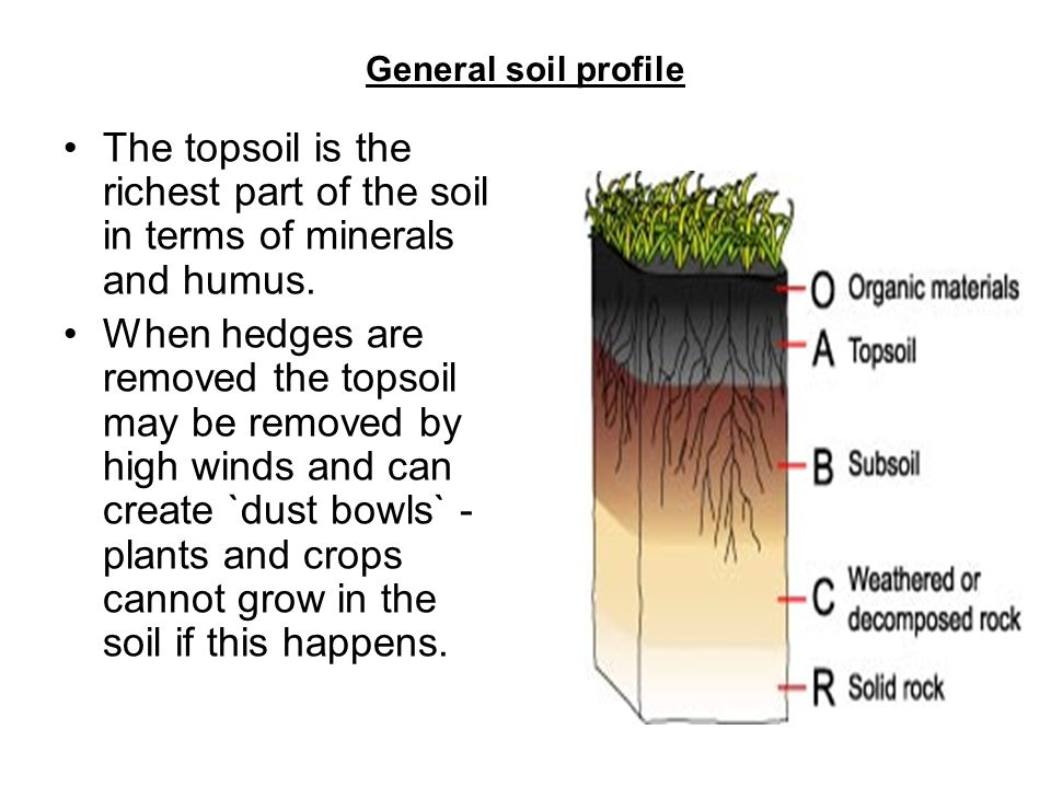 Comparing soils type of soil example of test jar ppt for 4 parts of soil