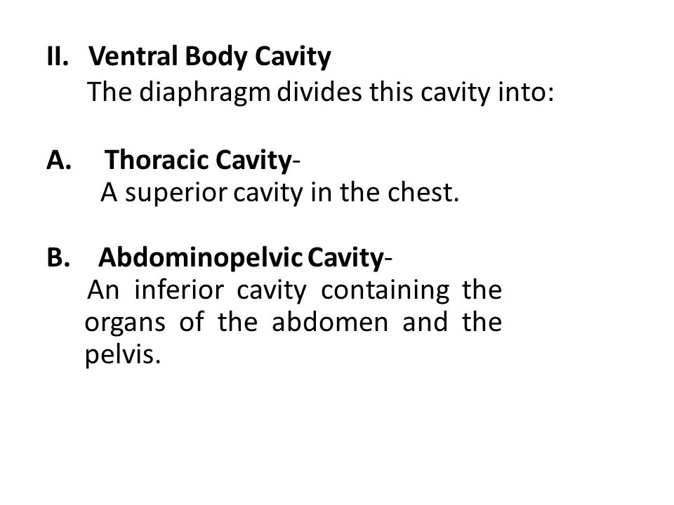 Ventral Body Cavity The diaphragm divides this cavity into: Thoracic Cavity- A superior cavity in the chest.