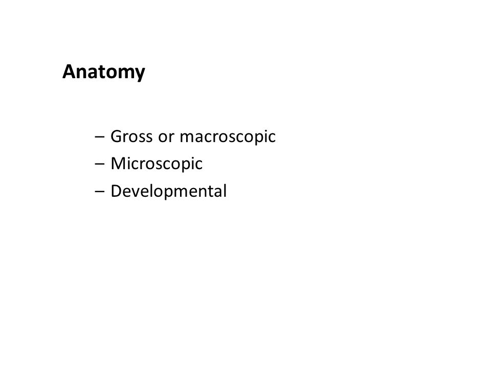Anatomy Gross or macroscopic Microscopic Developmental