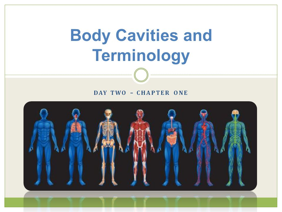 Body Cavities and Terminology