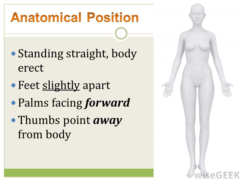 Anatomical Position Standing straight, body erect Feet slightly apart