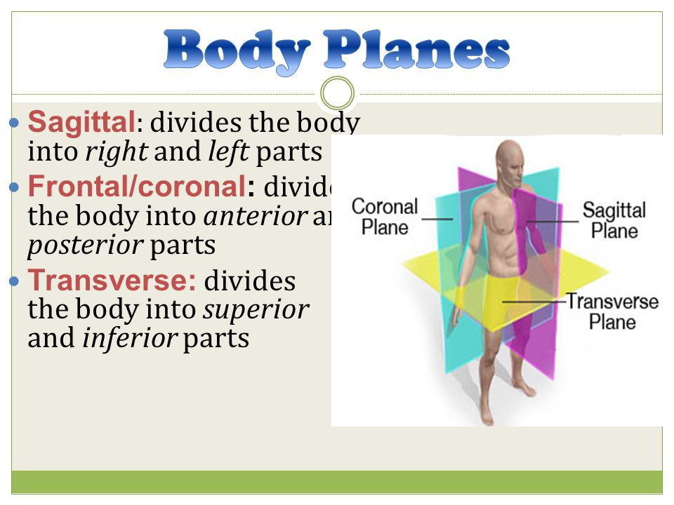 Body Planes Sagittal: divides the body into right and left parts
