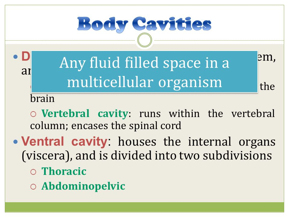 Any fluid filled space in a multicellular organism