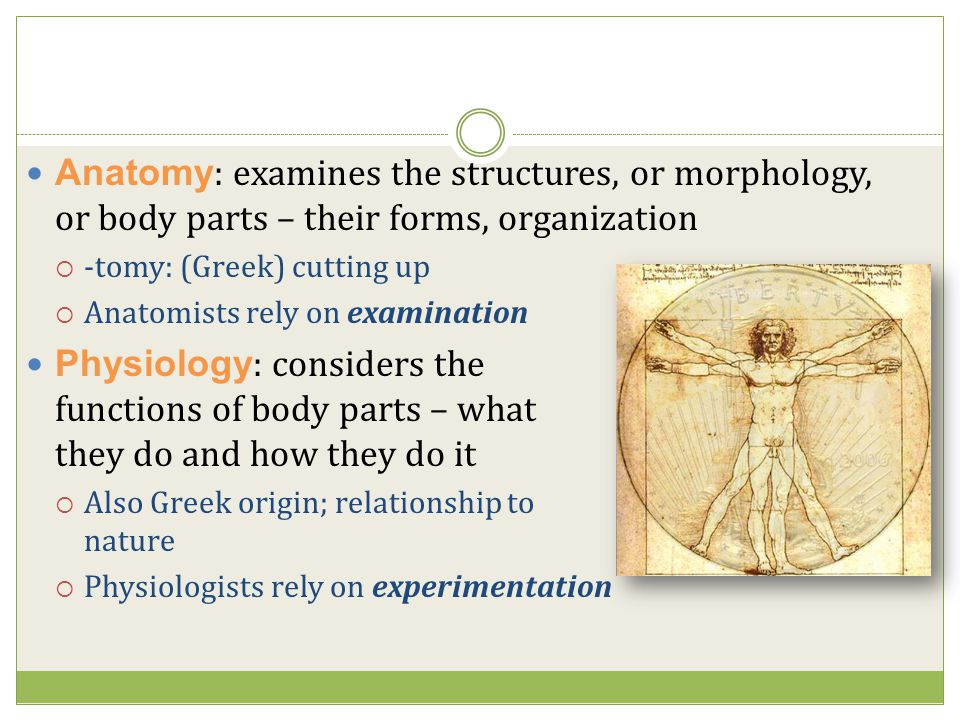 Anatomy: examines the structures, or morphology, or body parts – their forms, organization