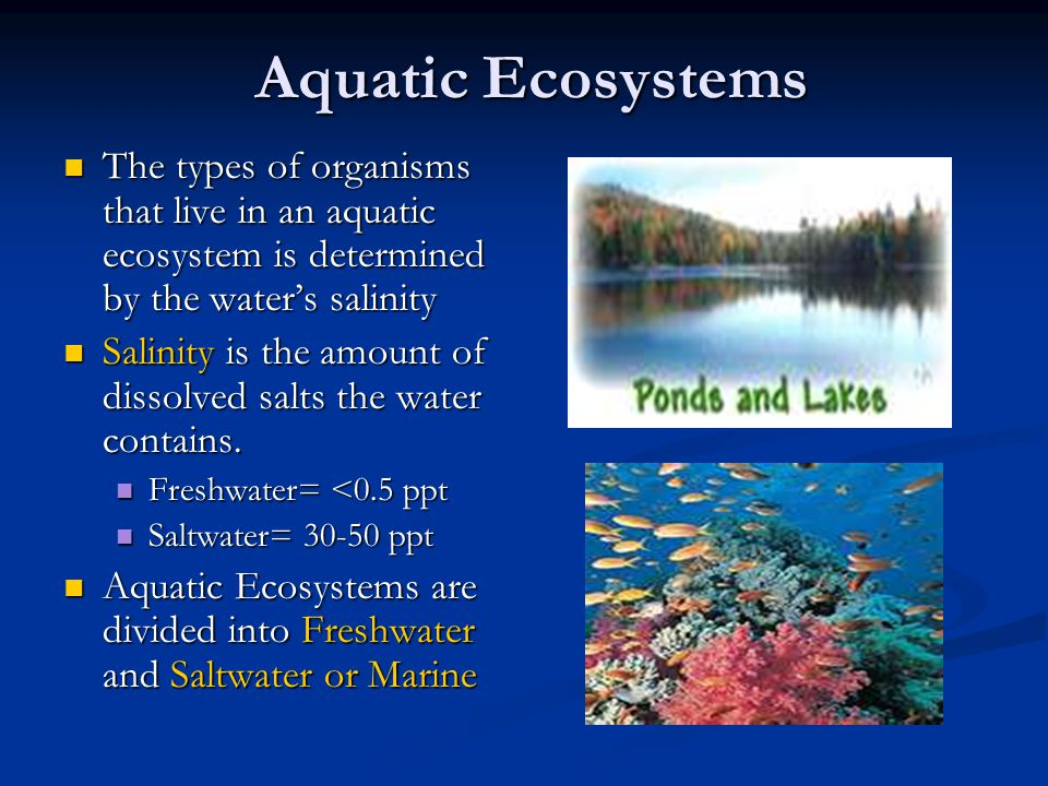 aquatic ecosystem Aquatic ecosystem research, branford, connecticut 182 likes 4 talking about this we help lake associations, water authorities, state agencies, and.
