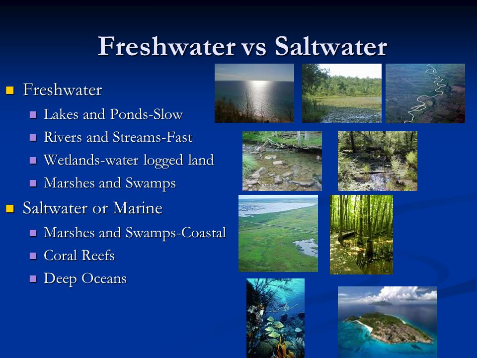comparing freshwater vs saltwater fishing Saltwater fish vs freshwater fish by jane 15 shares facebook twitter most fish live either in saltwater (oceans and seas) or freshwater (lakes, rivers, ponds and streams) freshwater angelfish originate from the amazon basin, orinoco basin and various rivers in the guiana shield in south america.