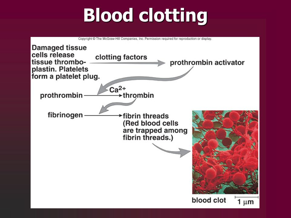 altered clotting essays Gene id: 2157, updated on 16-jan-2017 summary this gene encodes coagulation factor viii, which participates in the intrinsic pathway of blood coagulation factor viii is a cofactor for factor ixa which, in the presence of ca+2 and phospholipids, converts factor x to the activated form xa.