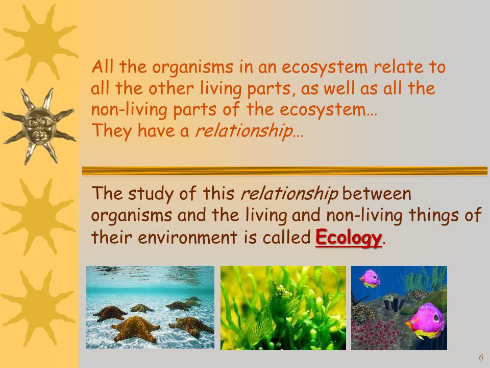 the relationship between organisms in an ecosystem