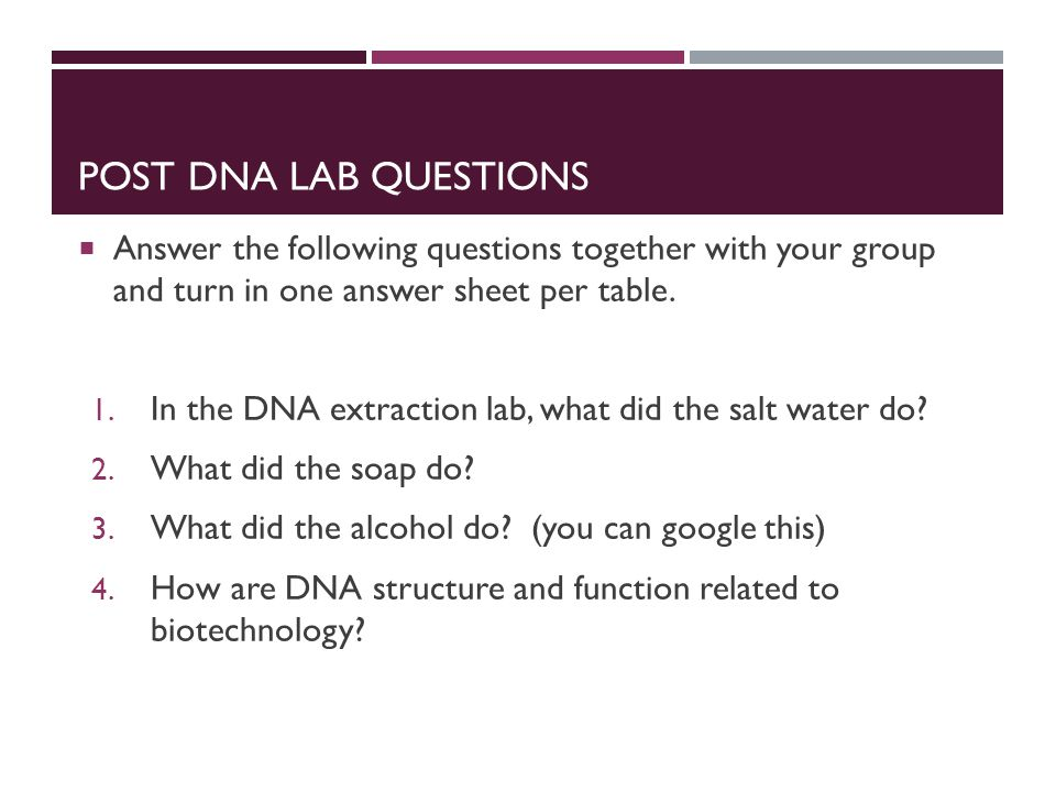 dna structure and function lab report3 Lab 11- dna structure and functionpdf download lab 11- dna structure and functionpdf (513 kb.